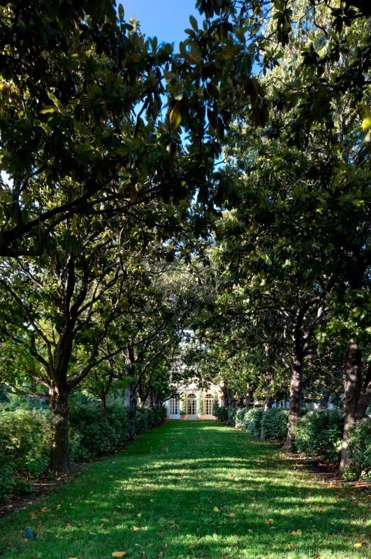 Row of Trees on Dallas Estate Property