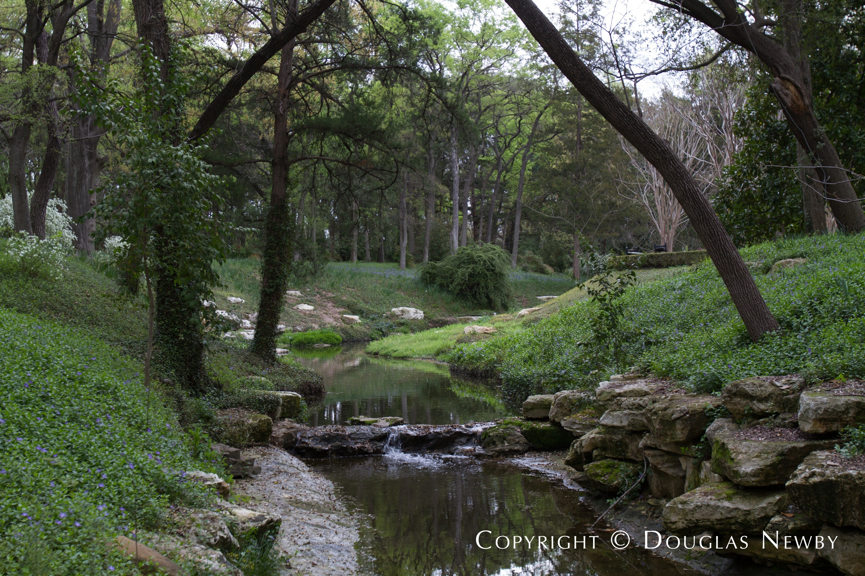 Stream Running Through Forest on Dallas Estate Property