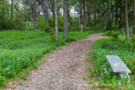 Path in Forest on Estate Property