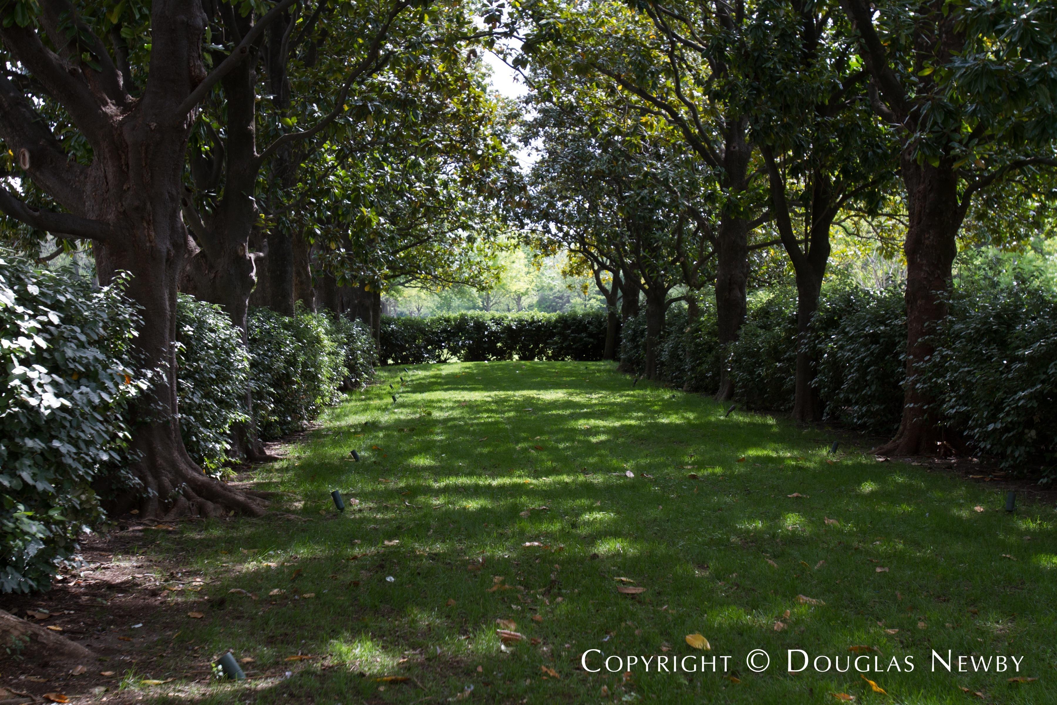 Tree Covered Landscape on Dallas Estate Property