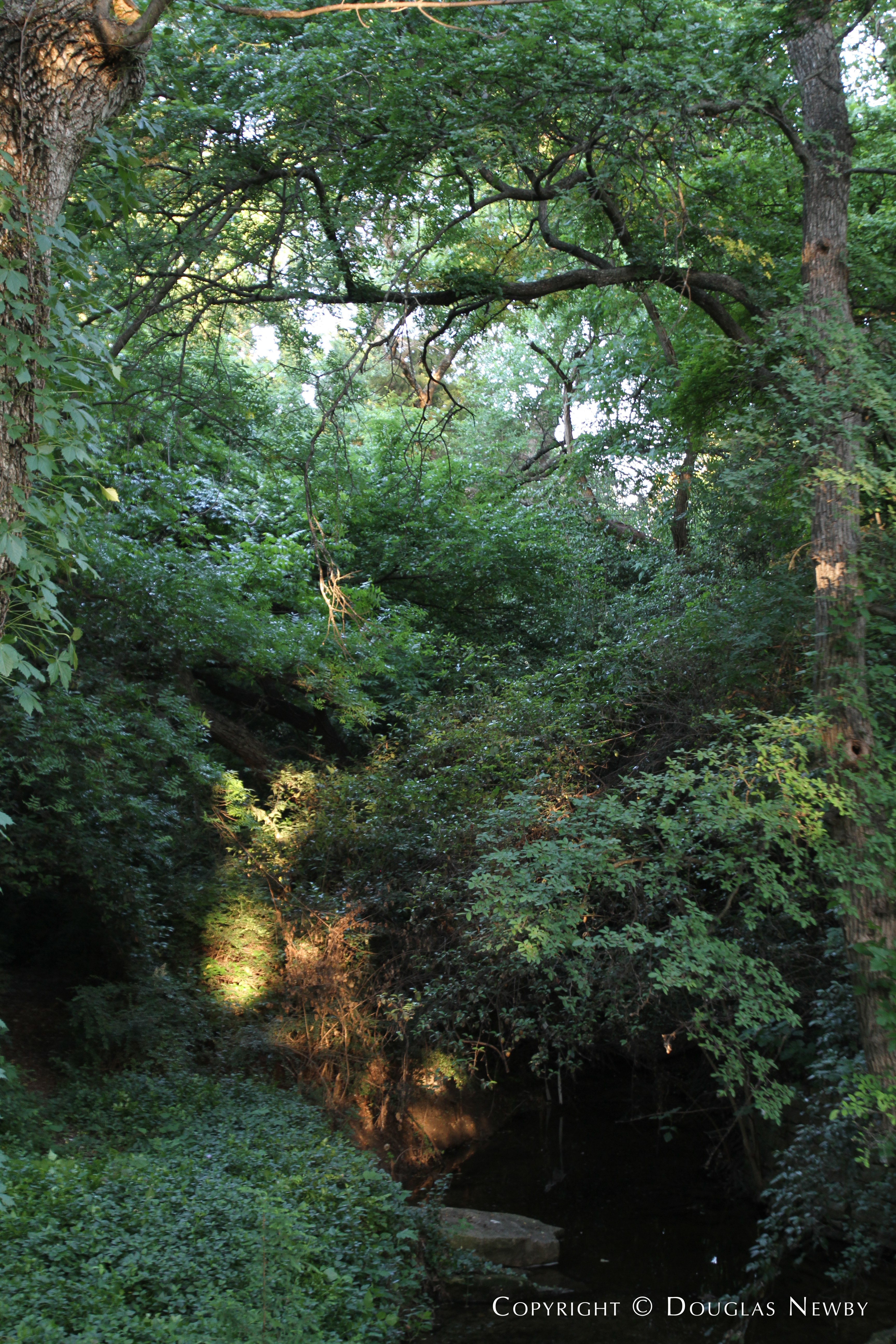 Wilderness Surrounding Mayflower Estates Property