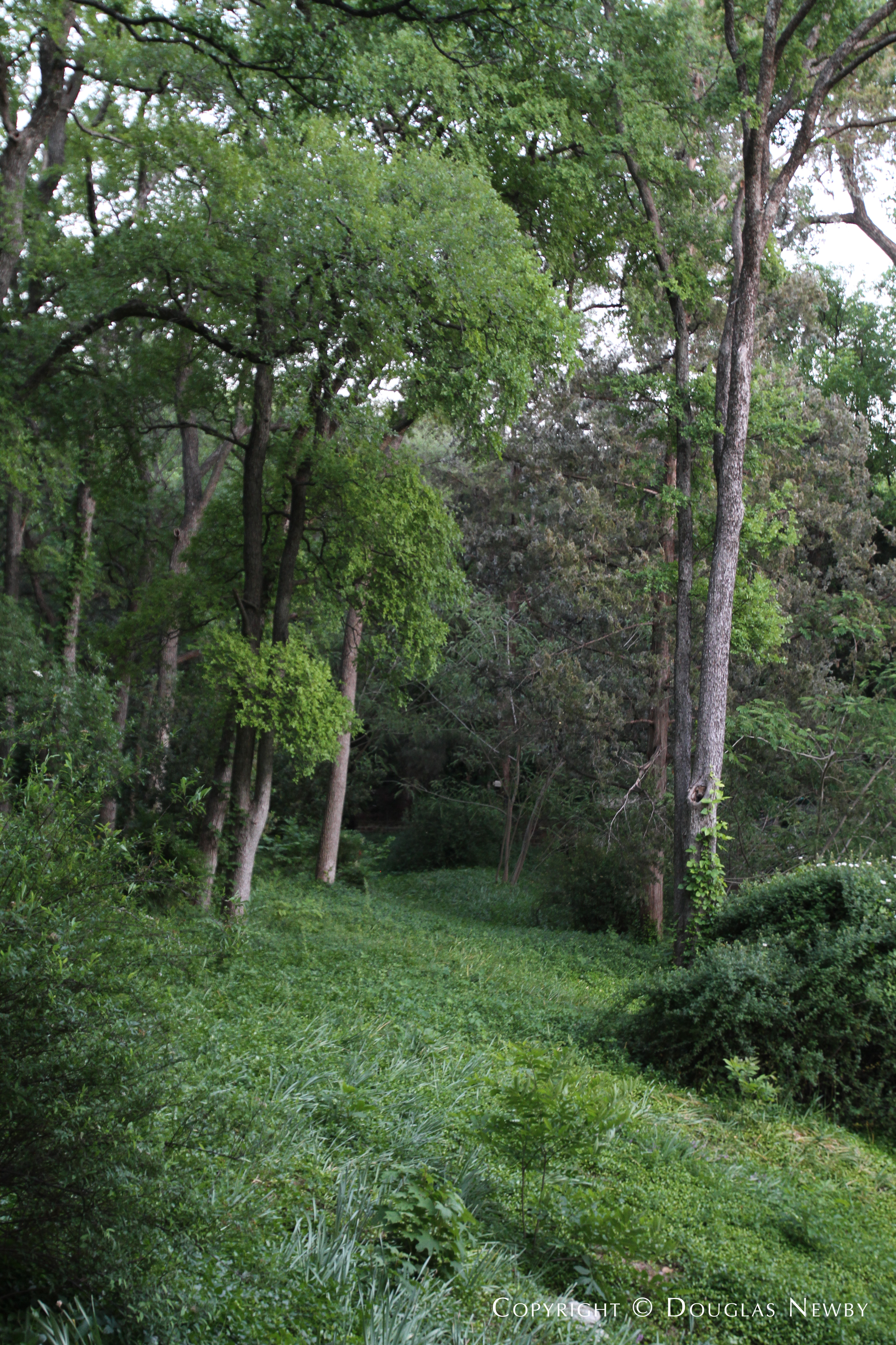 Trees and Forest in Preston Hollow