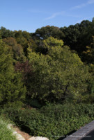 View of Trees From Glen Abbey Estate Property