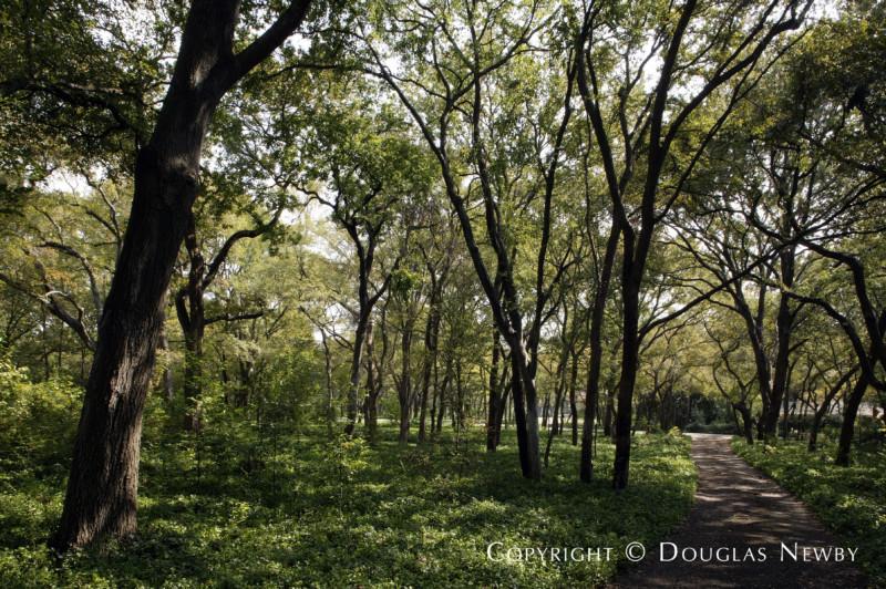4101 Cochran Chapel Road, Dallas, Texas