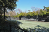 Tennis Court on Preston Hollow Estate Property