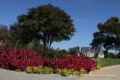 Flower Bed on Corner in Glen Abbey Neighborhood